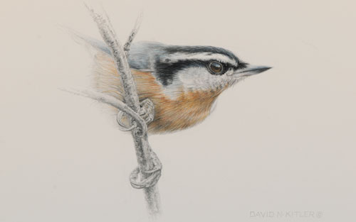 Draw Birds In 10 Easy Steps That Are Easy And From An Expert