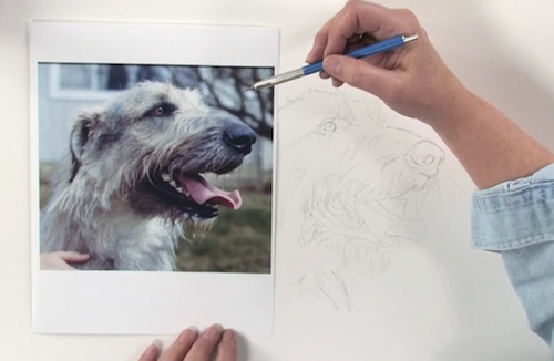 Pet Portrait Drawing Techniques How To Draw Dogs