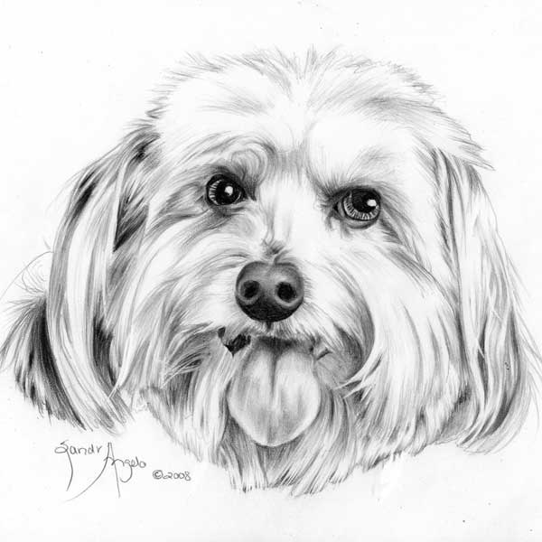 How to draw a dog's tongue, How to draw pets, Drawing dogs ...