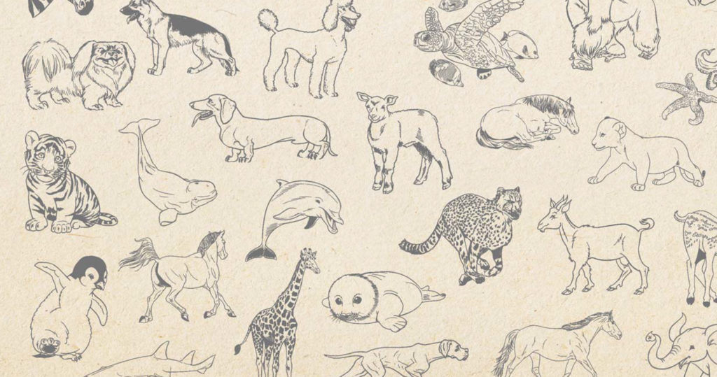 How To Draw Animals An Easy Drawing Guide For Starting
