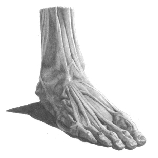 Drawing Basics Understanding Anatomy By Drawing The Foot Artists Network