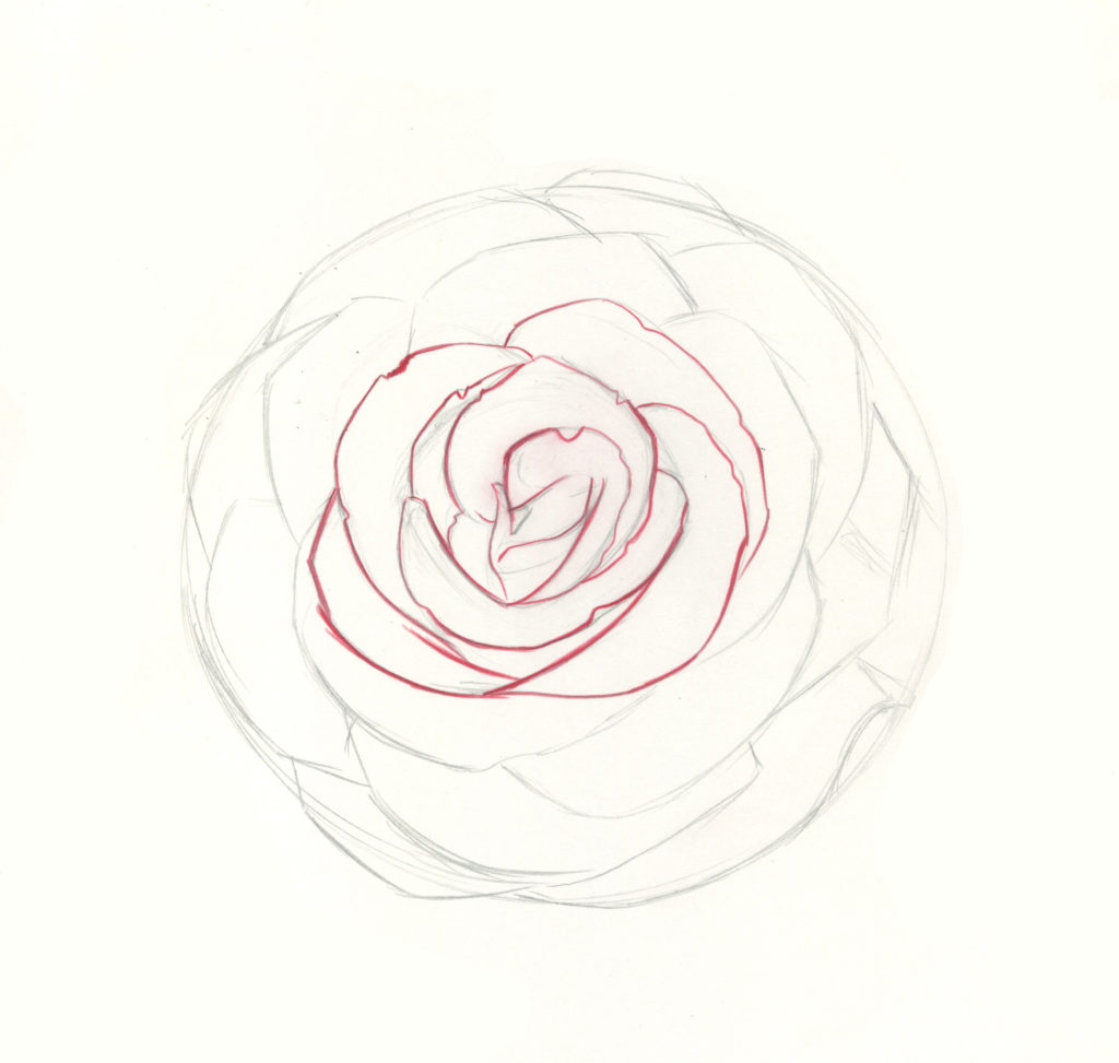 how to draw roses step 7