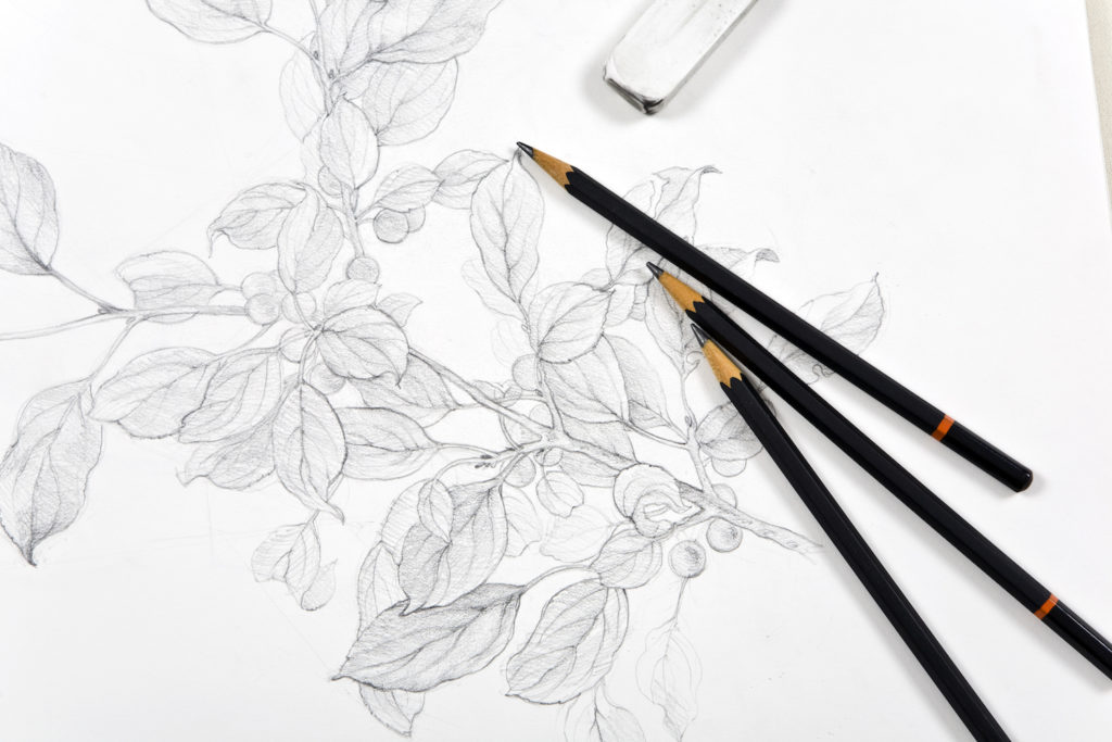 Learning To Draw With Graphite Pencil Here S What You Need To Know