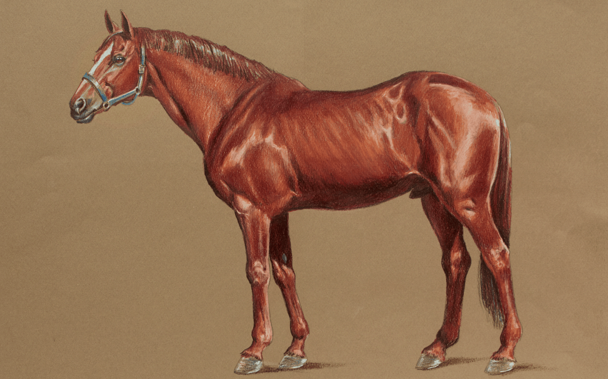Colored Pencil Animals How To Draw A Horse Streaming Video Artists Network