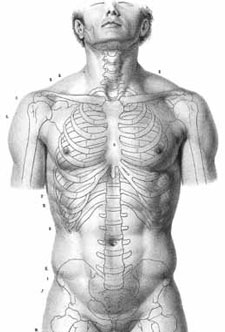 Drawing Anatomy For Artists Ultimate Free Guide Artists Network